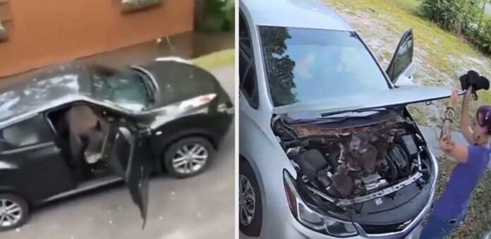 Ubudne gæster i bilen